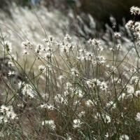 Winter-bare wildflowers....