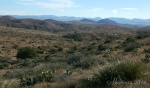Desert foliage and mountains along Drinking Snake segment of Black CanyonTrail