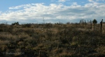Fenceline with scrub, cacti, and morning clouds along Drinking Snake segment of Black CanyonTrail