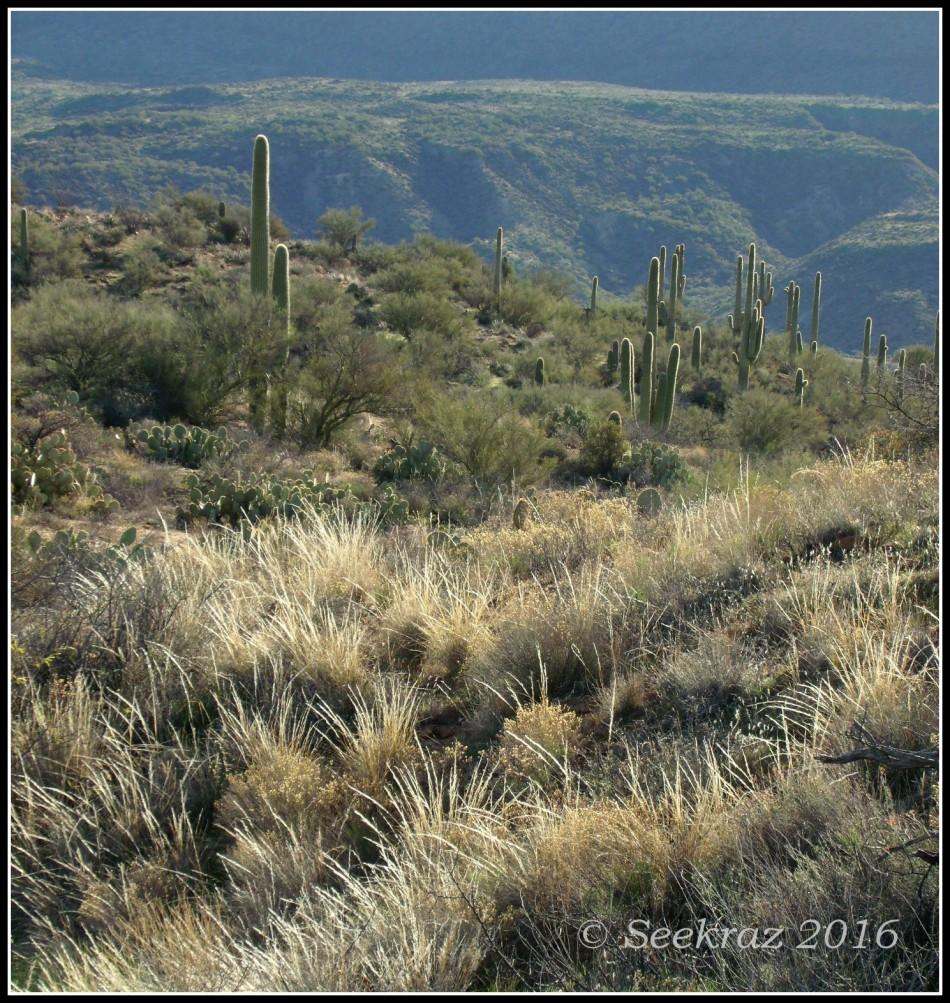 Arizona Sonora Desert Morning