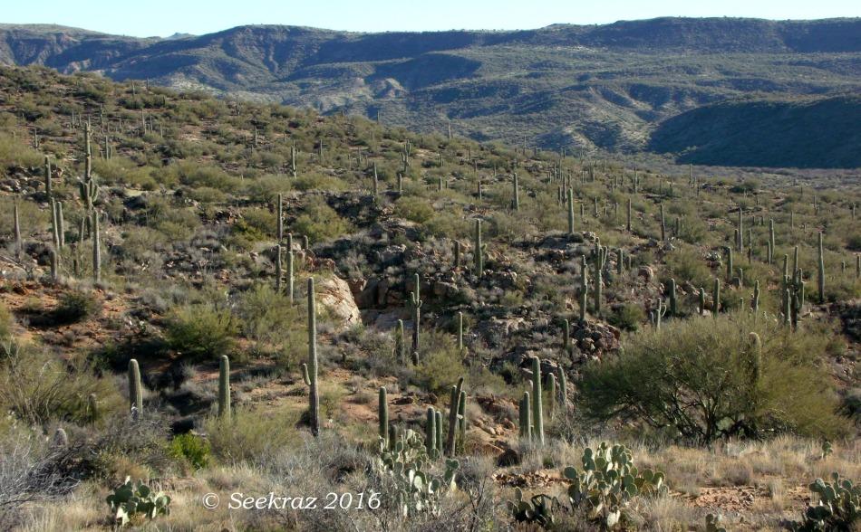 Rolling desert hills of Arizona Sonora Desert