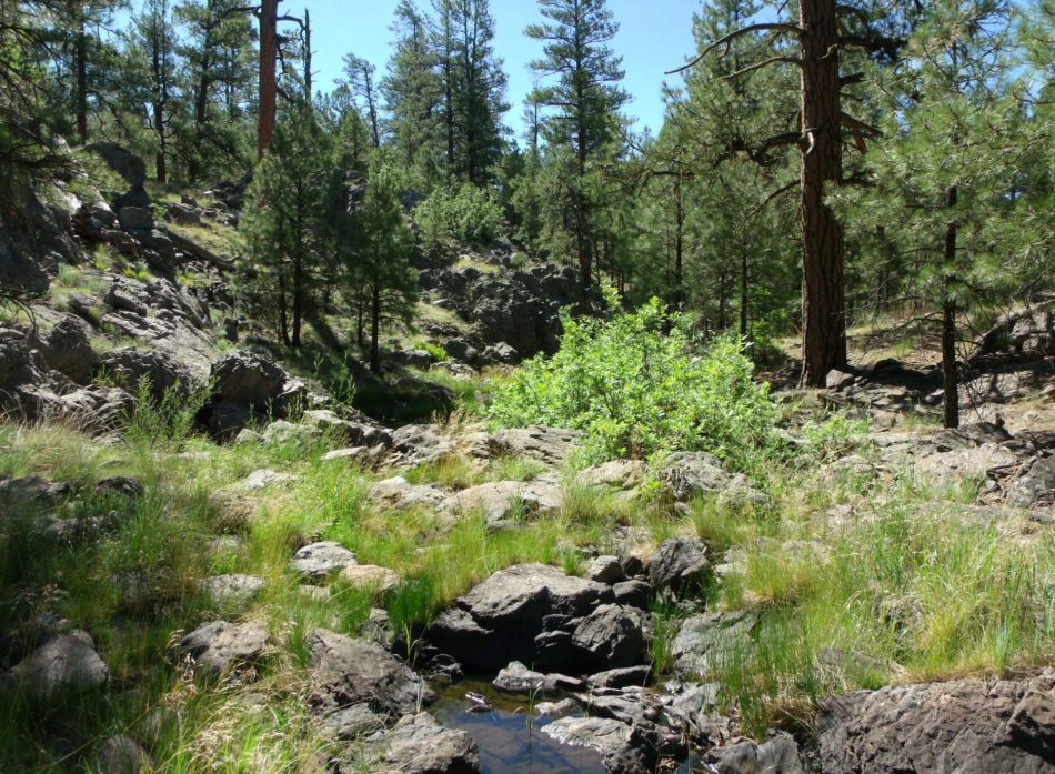 Sycamore Canyon forest and stream