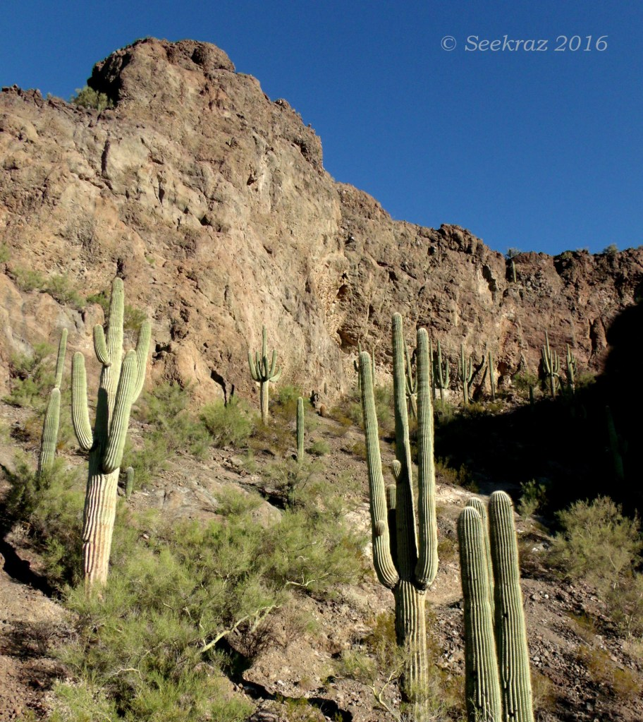 South side arena of Picacho Peak