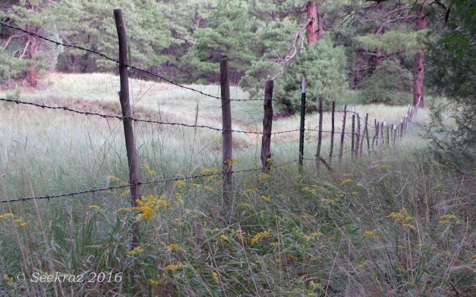 forest fence-line and flowers