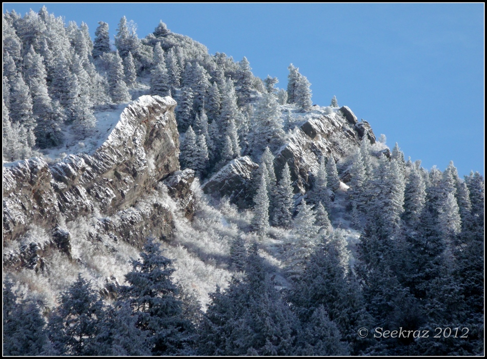 Snow covered hillside in Millcreek Canyon