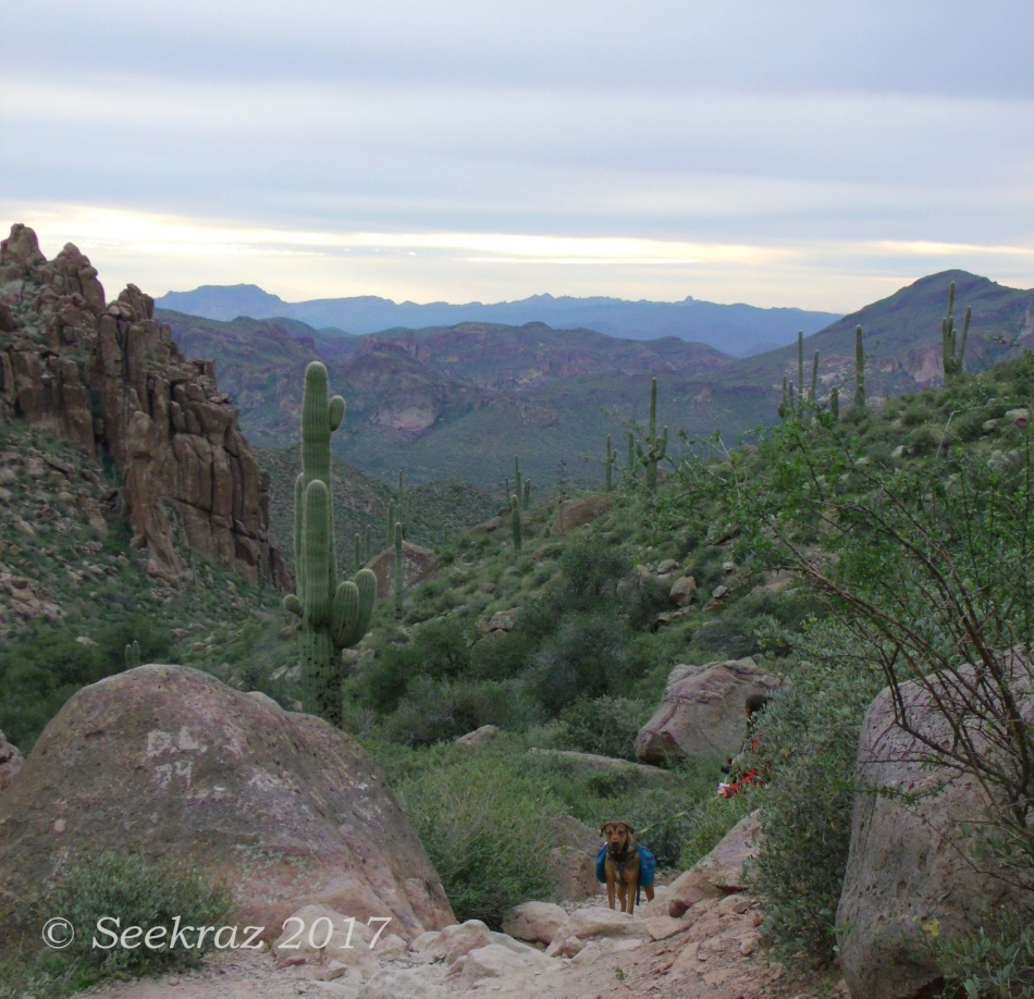 Peralta Trail company approaches