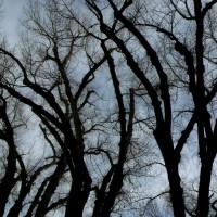 Liberty Park, Salt Lake City - Cottonwood Abstracts