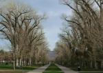 Looking north through Cottonwood Corridor in Liberty Park, Salt LakeCity