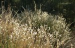 DL Variety of dried desertwildflowers