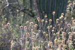 DL Wildflower globes and saguarocactus