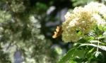 Bells Canyon Upper FallsButterfly