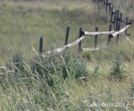 West Jordan Preserve with fence andthistles