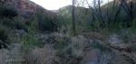 Badger Springs Trail1