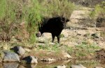 Badger Springs Trail19