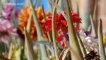 Decorated Aloe Vera3