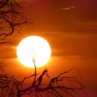The Captured Sun....