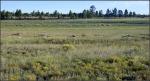 Anderson Mesa Meadow