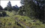 High meadow trail