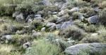 Green desert in WillowCanyon