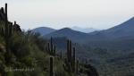 Saguaros and hazy mountains,WJT