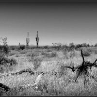 Desert trespass....