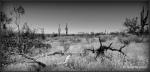 Desert view in black andwhite