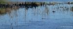 Watson Lake intimate reflectedgrass