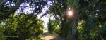 Watson Lake, Peavine Trail in themorning