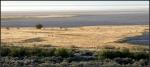 Shoreline of Antelope Island atsunrise