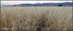 Arizona wild grass in roadsidecontext