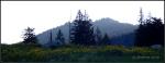 Wildflower carpet with mountainsilhouette