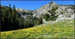 Flower covered hillside with Wasatch Mountainbackground