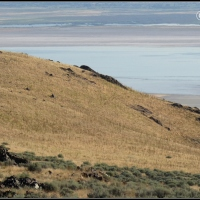 Toward Frary Peak on Antelope Island - Part First