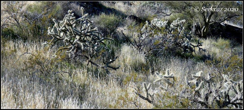 White Tank Mountain desert hillside