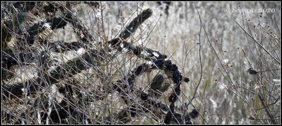White Tank Mountains grass and cactus