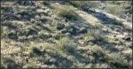 White Tank Mountains grassy hillside