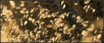 Wild grass abstract3