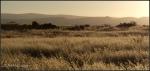 High desert prairie atsunrise