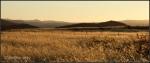 Distant sun over field ofgrass
